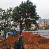 承包市政綠化工程,小區景觀綠化,公園園林施工