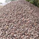 成都哪余有鵝卵石賣_鵝卵石成都價格_廠家銷售。