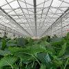 綠色生態農業 景觀山水 PC陽光板溫室