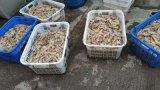 配置高温控精海虾烘干房专业