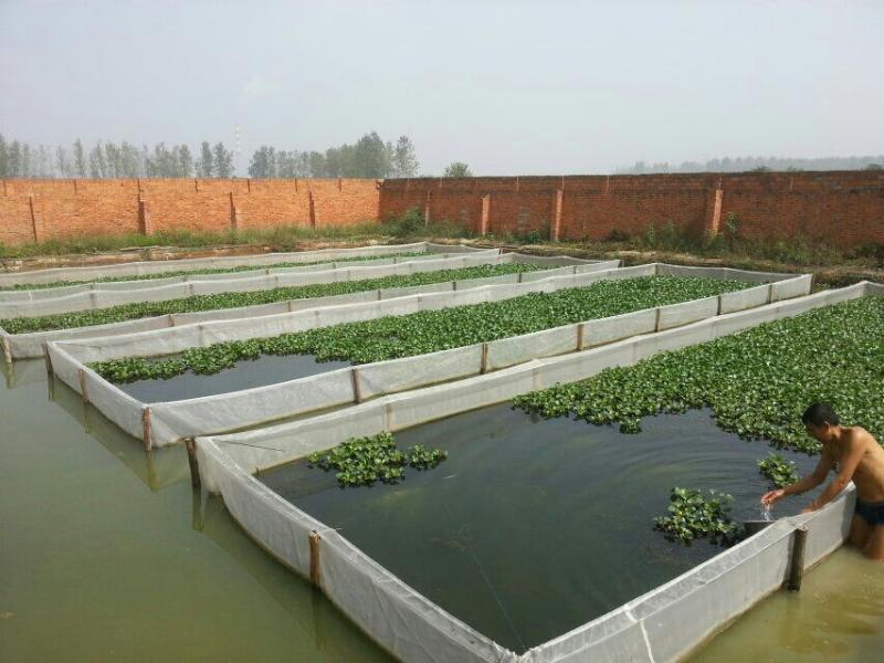 水蛭網~水蛭網箱~螞蝗網箱價格~水蛭養殖技術傳授