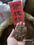 辽宁省紫穗槐种子一览表