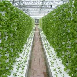 温室大棚 无土栽培蔬菜 三角立柱式 基质栽培