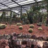园本格直供火山石 过滤水用火山石 多肉植物栽培基质