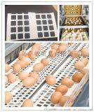聚丙烯打孔鸡蛋输送带