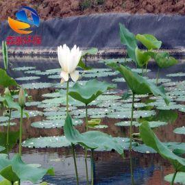 藕池防水橡胶布 防渗土工布 土工膜 HDPE土工膜 莲藕种植专用防水