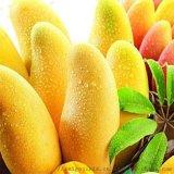 气泡式果蔬清洗机 商用蔬菜水果清洗机