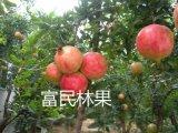 滎陽富民石榴 新鮮水果薄皮軟籽甜石榴