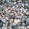 本格厂家供应园艺用鹅卵石 河滩鹅卵石
