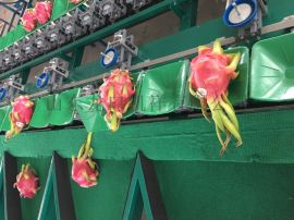火龙果重量分选机 重量分选品质较好的机器