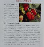 供应批发草莓苗太空2008草莓苗