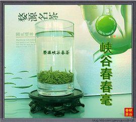 婺源峡谷春春毫绿茶