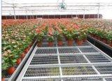 育苗花卉種植可移動苗牀
