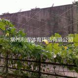 园艺植物攀爬黄瓜绿色PE网 厂家供应 欢迎来电咨询