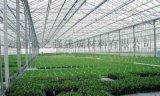 全陽光板連棟溫室大棚的優缺點