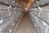 宏偉|HW1800型|1800|養雞自動化設備