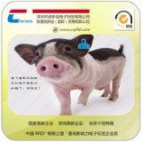 数据集采,厂家RFID低频动物耳标,猪、宠物电子耳标厂家,家畜牲口农场畜牧业养殖管理