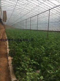 湖南省柑橘滴灌管材系统滴灌管生产安装山区灌溉滴灌管