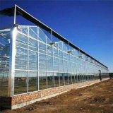 玻璃暖棚,玻璃连栋大棚建设