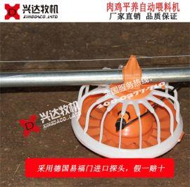 兴达 XD-RJPY-ZDSLX 养鸡料线 养殖料线 肉鸡自动喂料线 肉鸡自动喂料设备