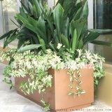 304不鏽鋼花盆 玫瑰金黑鈦商場裝飾花盆定做