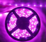 5050-60裸板不防水LED軟燈條