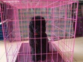 银艺丝网厂直销手工鸡鸽兔笼子  折叠铁丝笼