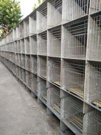 如何养兔子笼子厂家直销
