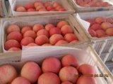 陝西蘋果紅富士蘋果價格