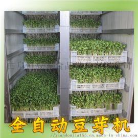 山东鲜豆家豆芽机设备制造商