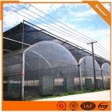 塑料薄膜大棚 花卉水果温室大棚 连栋棚 产地资源