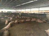 养羊场帆布卷帘,猪栏卷帘