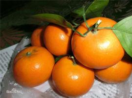 沃柑苗批发 哪里有苗木出售 沃柑苗栽植技术