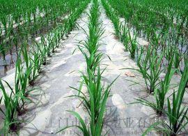 塑料薄膜 地膜 农用薄膜
