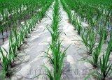 塑料薄膜 地膜 農用薄膜