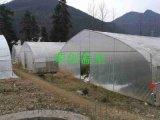 【陕西温室】铜川温室大棚简易滴灌技术