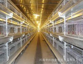 阶梯式双排捡蛋机 喂料机 刮板清粪机养鸡设备