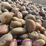 鵝卵石廠家 園林景觀裝飾鵝卵石 水處理鵝卵石