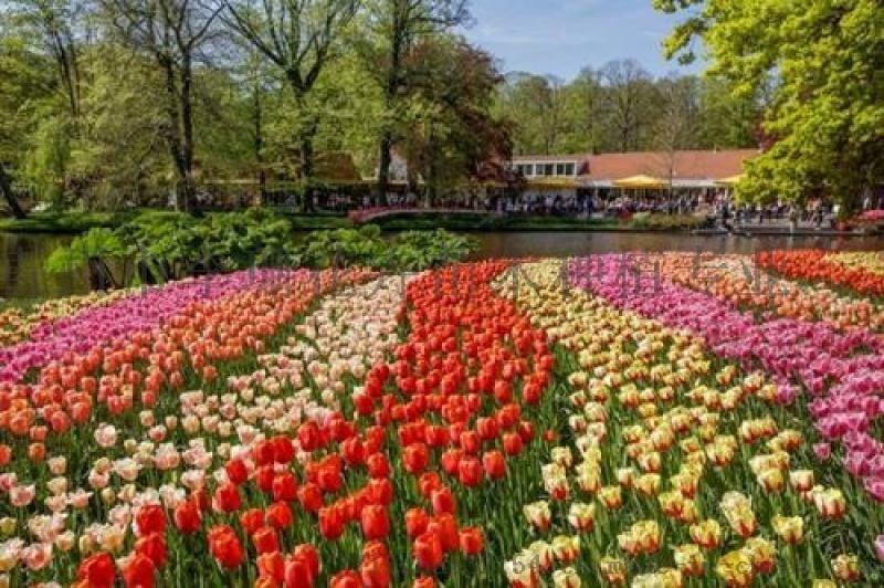 五色草花海景观立体花坛专业设计