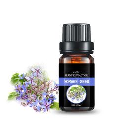 植物基础油 琉璃苣油 日用化妆品原料 基底油