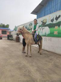 矮馬價格 純種矮馬 矮馬哪裏好
