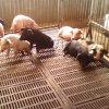 养殖场超声波加湿机 降温消毒设备