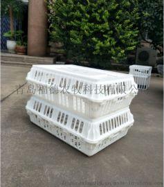 淘汰鸡笼 塑料鸡筐 拉鸡塑料笼 鸭筐