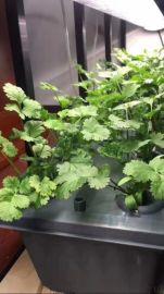 热销新款植物灯 led植物灯 室内植物生长灯