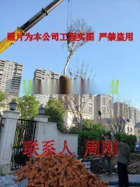 苏州紫薇树种植基地 紫薇花 百日红 别墅庭院绿化