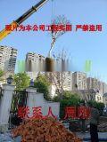 蘇州紫薇樹種植基地 紫薇花 百日紅 別墅庭院綠化