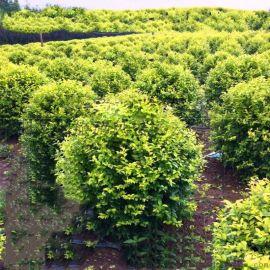 武汉植物墙墙面绿化垂直绿化