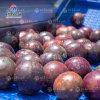 百香果水果自动毛辊气泡清洗风干生产线