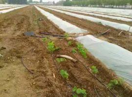 湖南省衡阳市山区果树滴灌管材系统绿化苗木滴灌管材生产技术