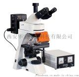 生物病理学正置荧光显微镜